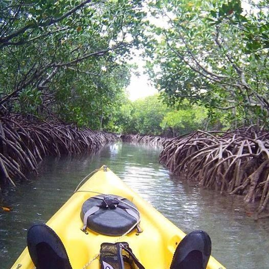 Conscious Traveler, Vuyelwa, paddling through mangroves in Ile d'Ambre