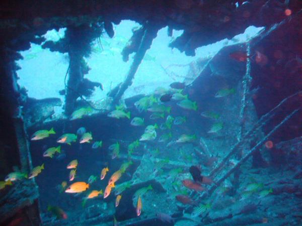 Diving in shipwrecks in Mauritius