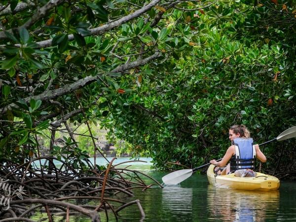 Sea-kayaking through mangroves in Amber Island